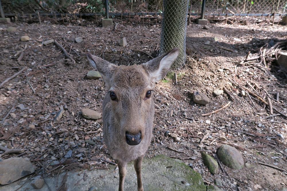 かわいいので子鹿さんにはたくさんあげました。(笑)