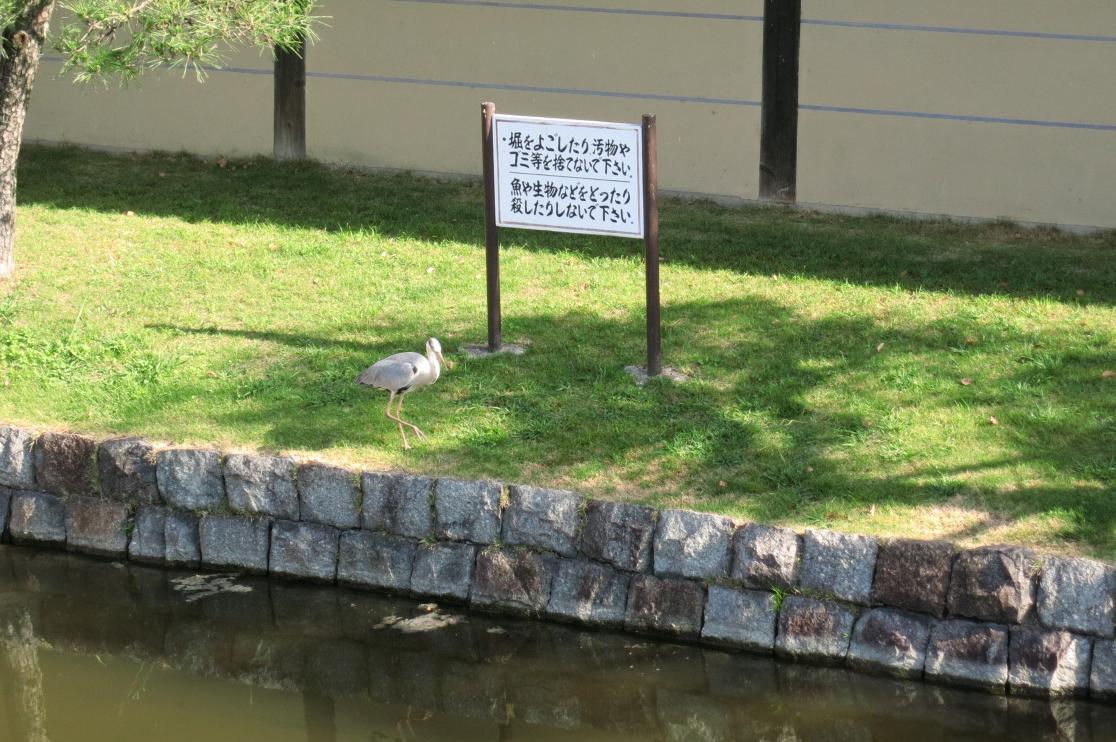 看板「魚や生物などをとったりしないでください」。んっ!?サギが魚を狙ってる(笑)