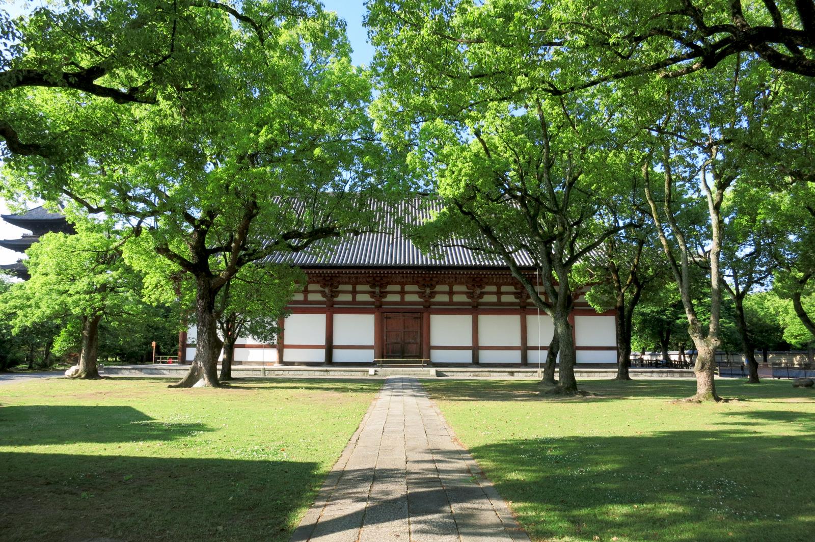 東寺の中心に位置する講堂。緑がきれいでした。