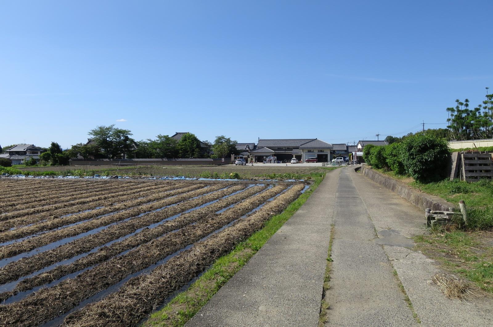 田んぼの中を歩いていると、飛鳥寺が見えてきます。