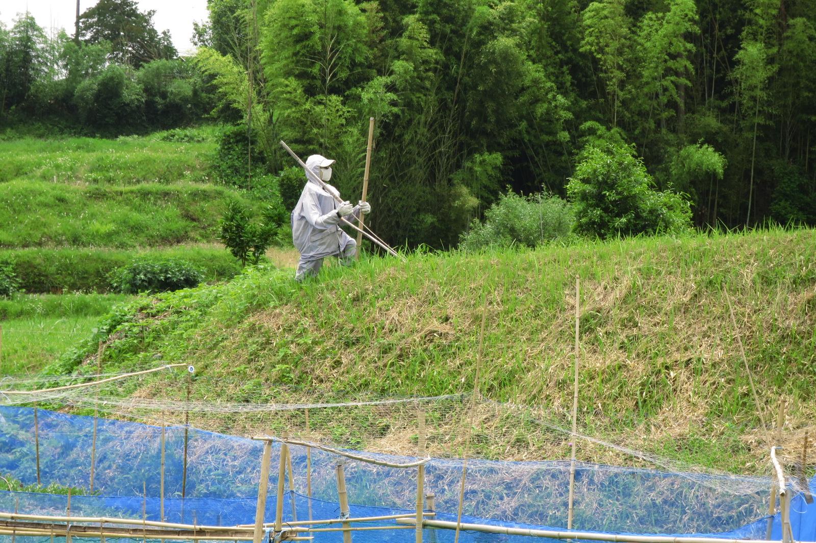 駐車場に向かう途中で見つけたリアルな案山子(かかし)。これから松尾寺、藤ノ木古墳に向かいます!