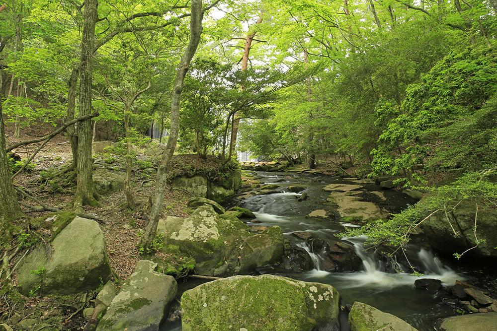 国の名勝地にも指定されていて美しい渓谷です。およそ4kmの散策コース。