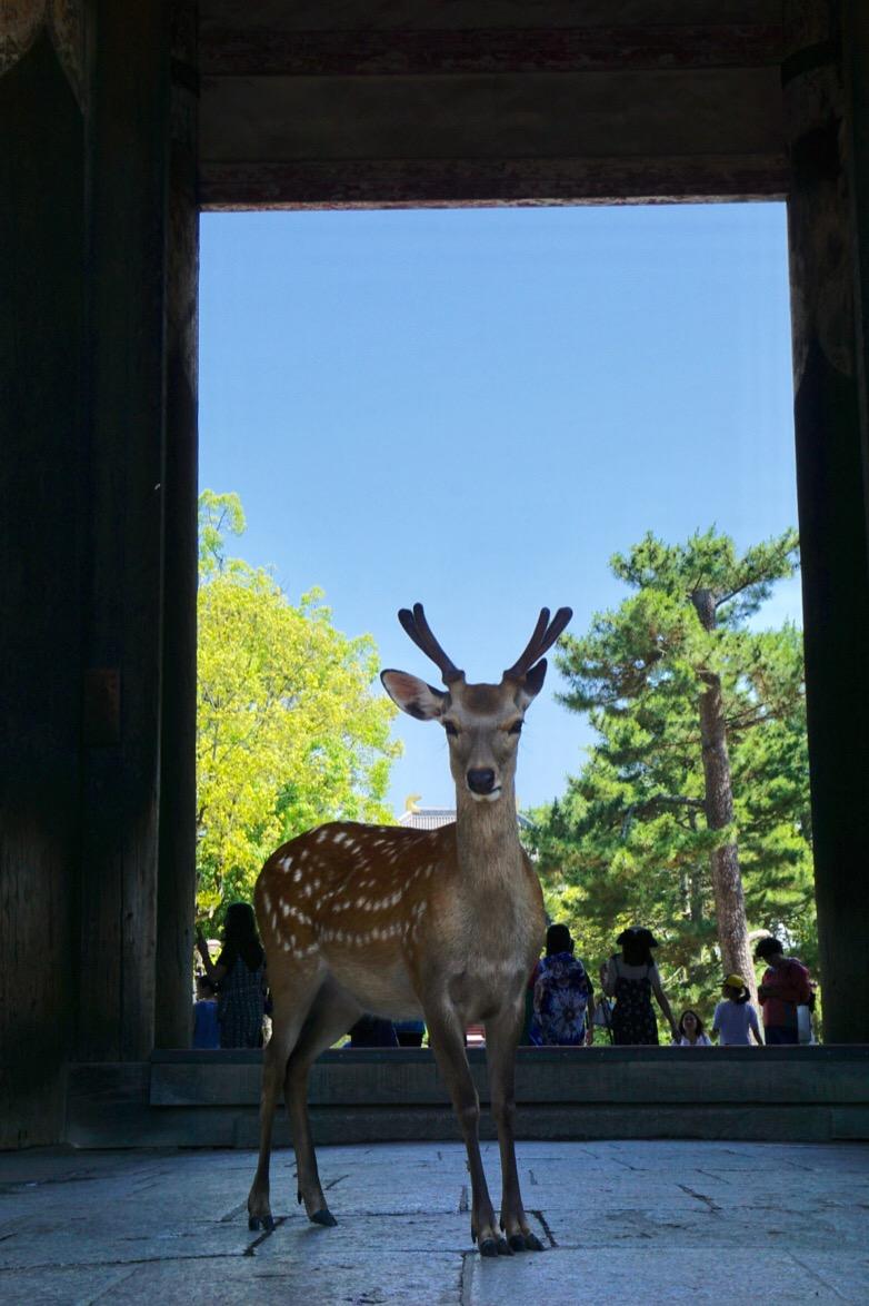 鹿もたくさんいます。餌をあげることができますよ。