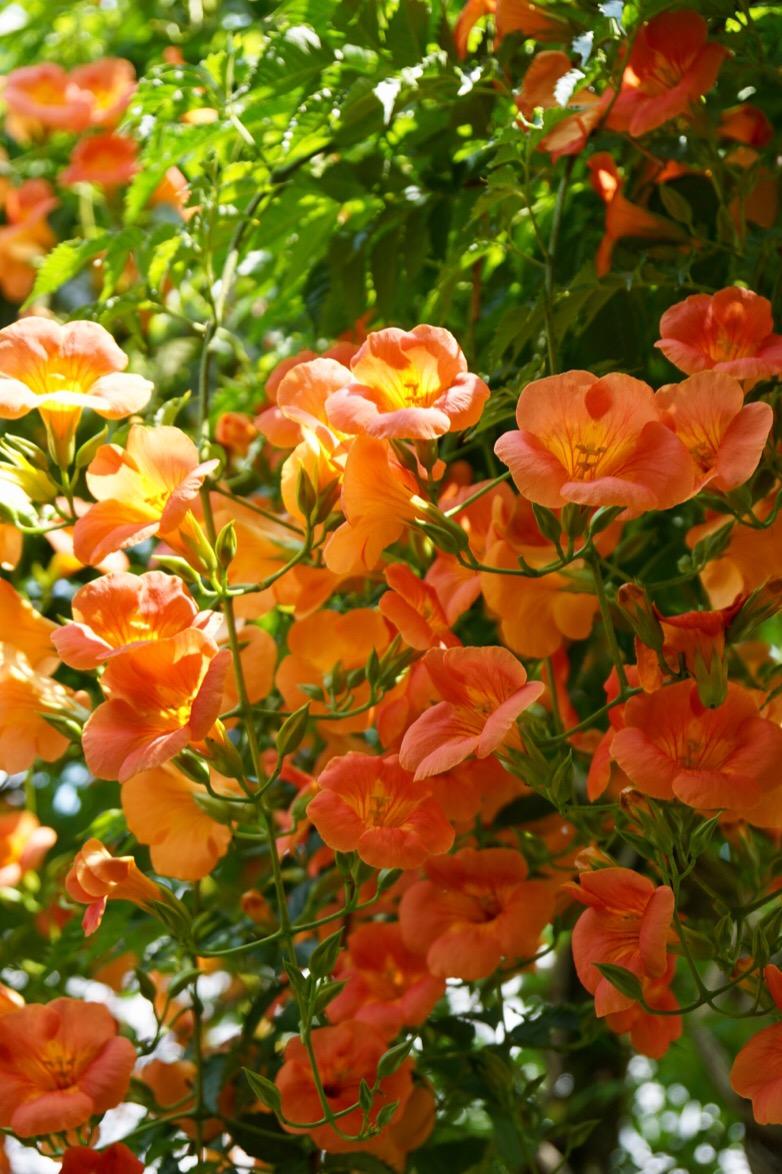庭園には色とりどりのお花が咲いています。