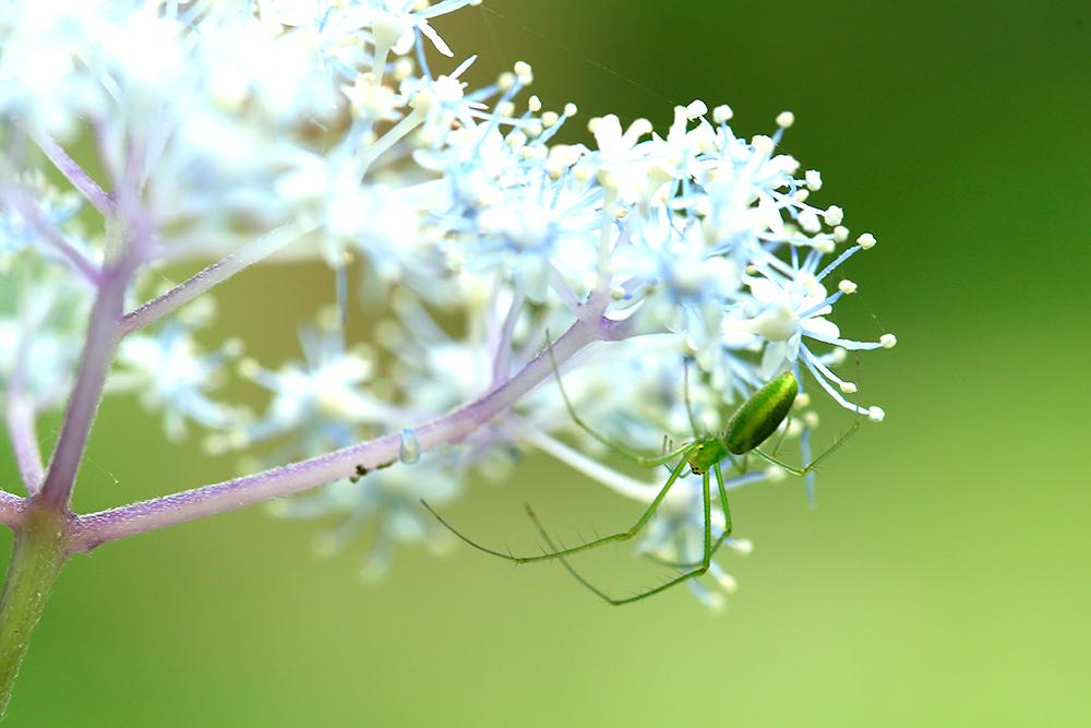 エサとなる羽虫や小さな昆虫もたくさんいるので、クモさんも食べ放題かな。。