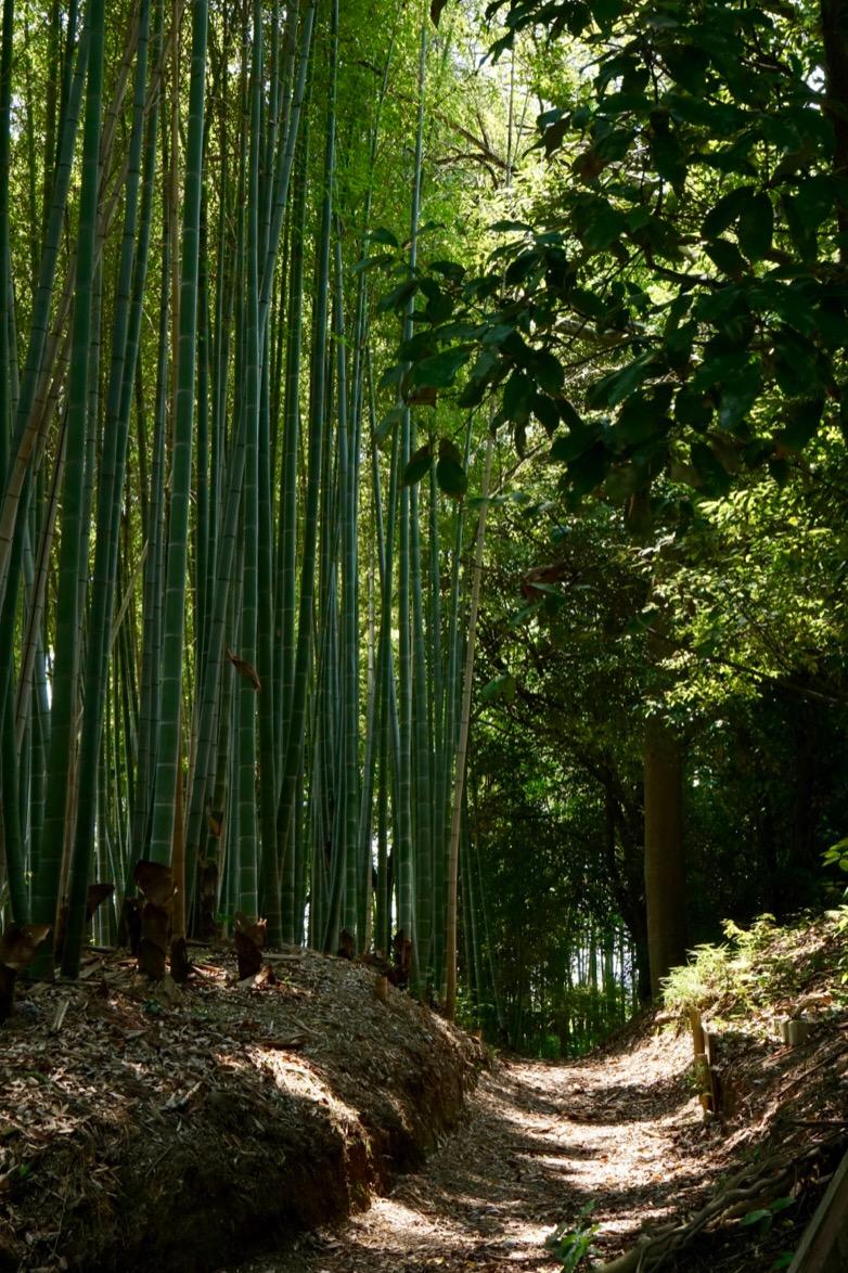 美しい竹の小道がありました。