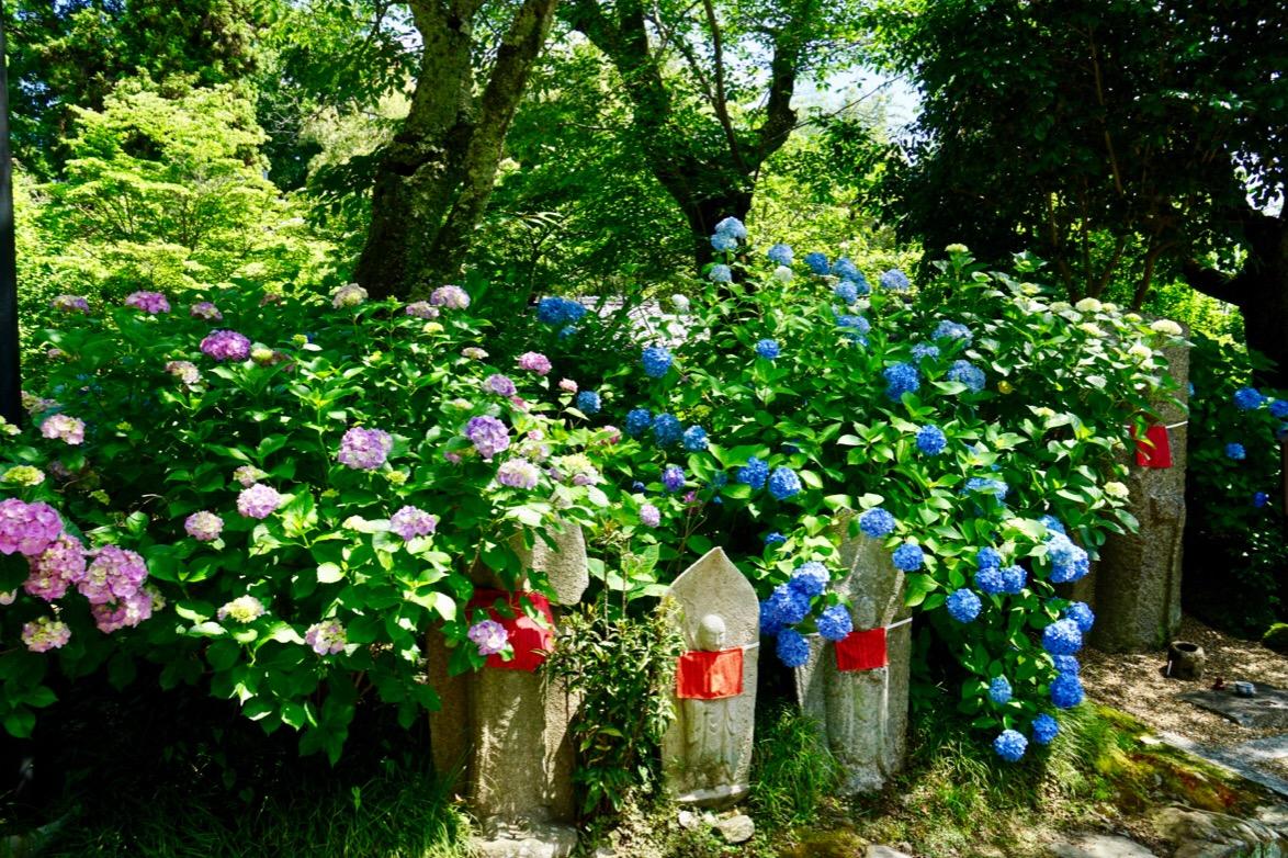 お地蔵さんと紫陽花。