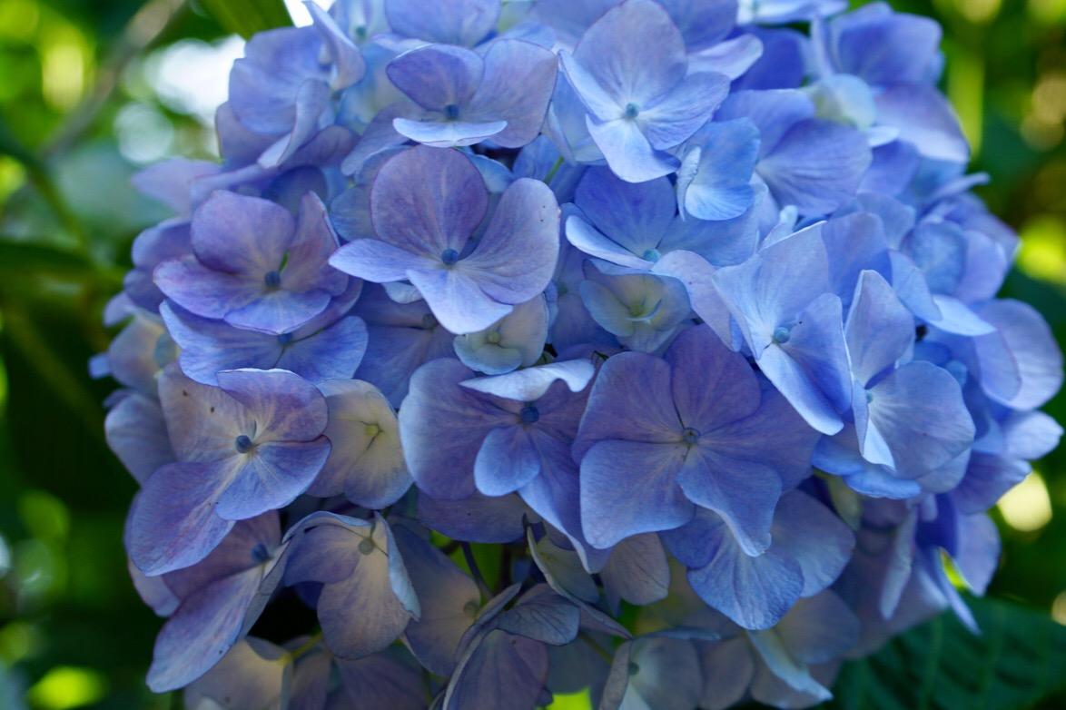ブルーも清々しいですね。