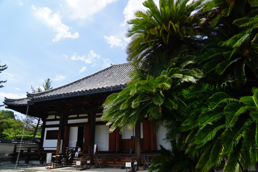 本堂横の木が立派で南国風です。