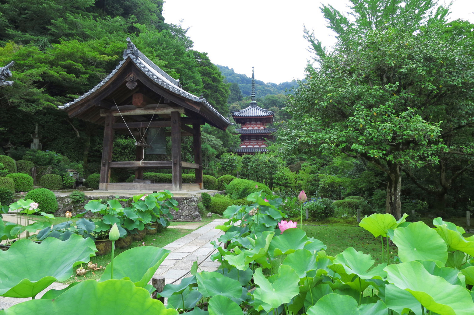 奥に見える三重塔は、元は兵庫県の高蔵寺にあったものを三室戸寺が買い取って移されたものです。