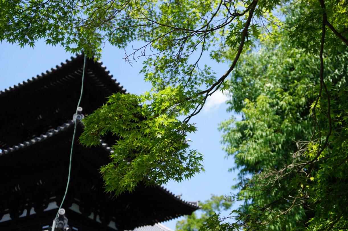興福寺の三重塔。緑に囲まれた美しい塔です。