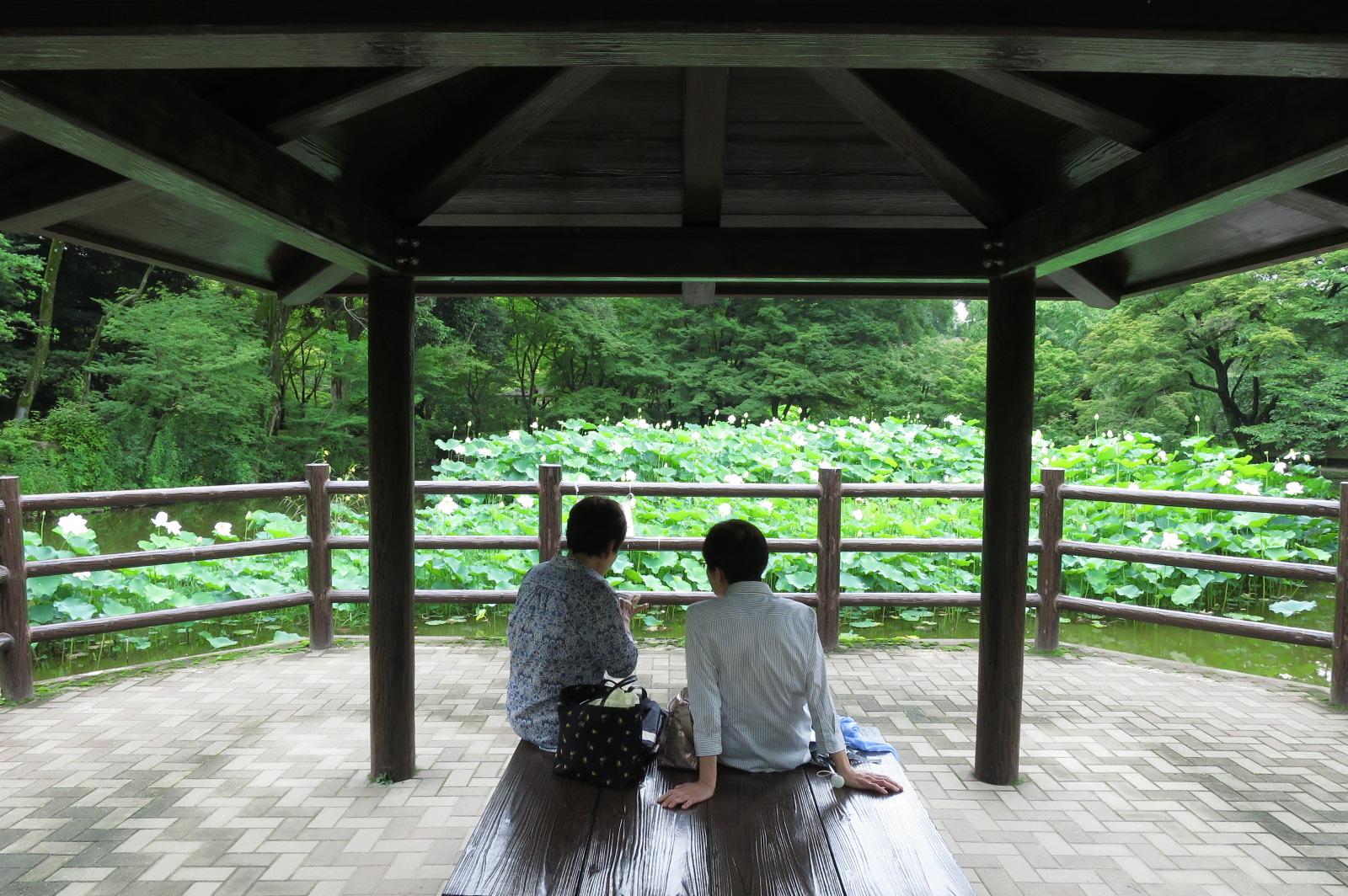 蓮池前の休憩所。のんびり会話を楽しみながらお茶やランチもできますね。
