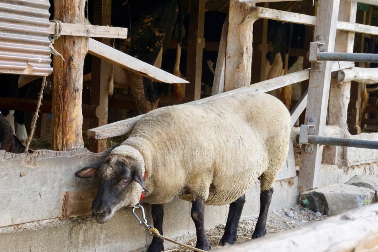 般若寺の前には植村牧場が。