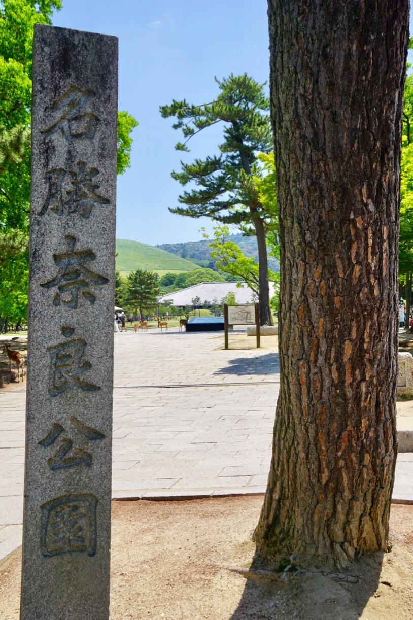 奈良公園をぶらぶら歩くと身も心も癒されます。
