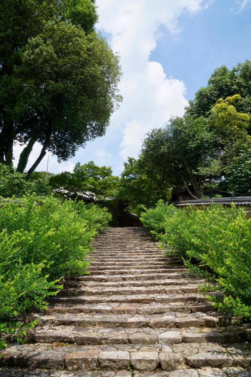 白毫寺は藤の花でも有名です。