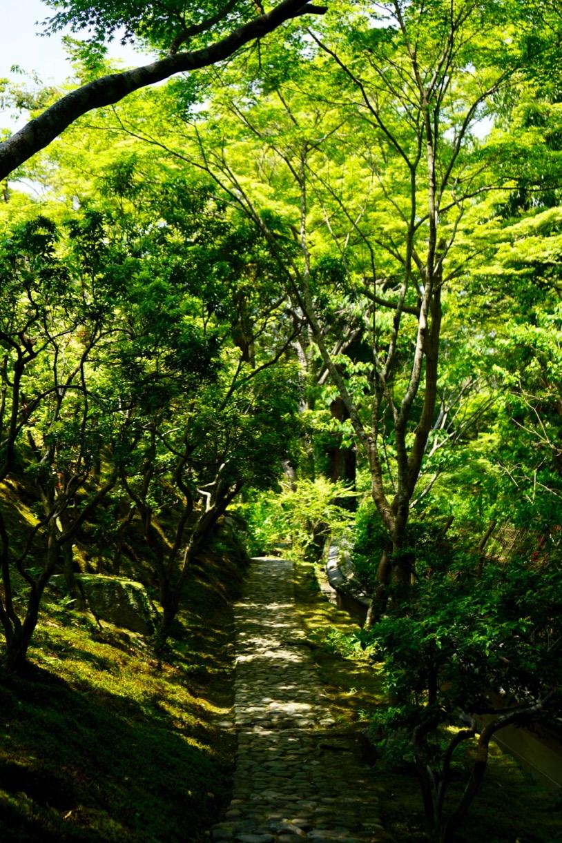 緑豊かな美しい庭園です。