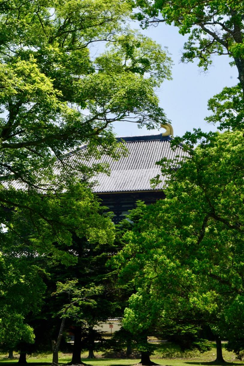 東大寺周辺は新緑がとても美しいです。