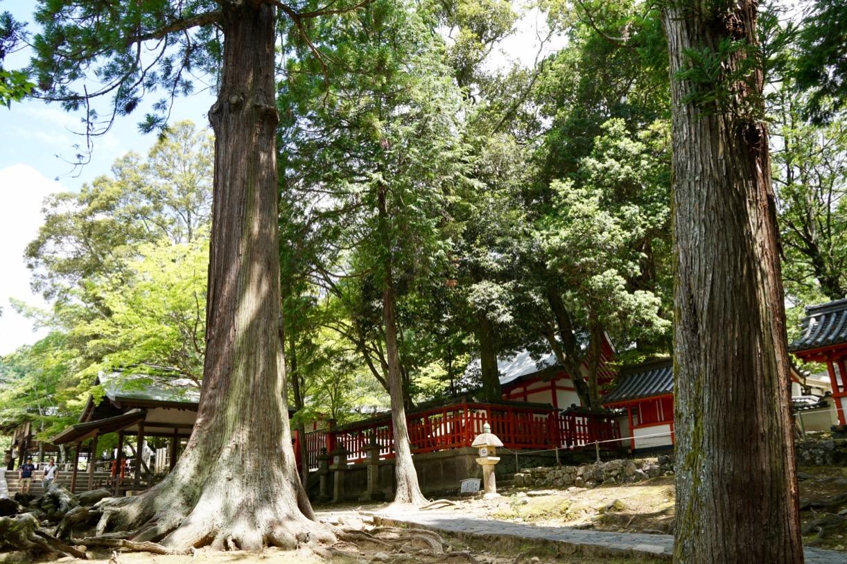 近くには手向山八幡宮があります。
