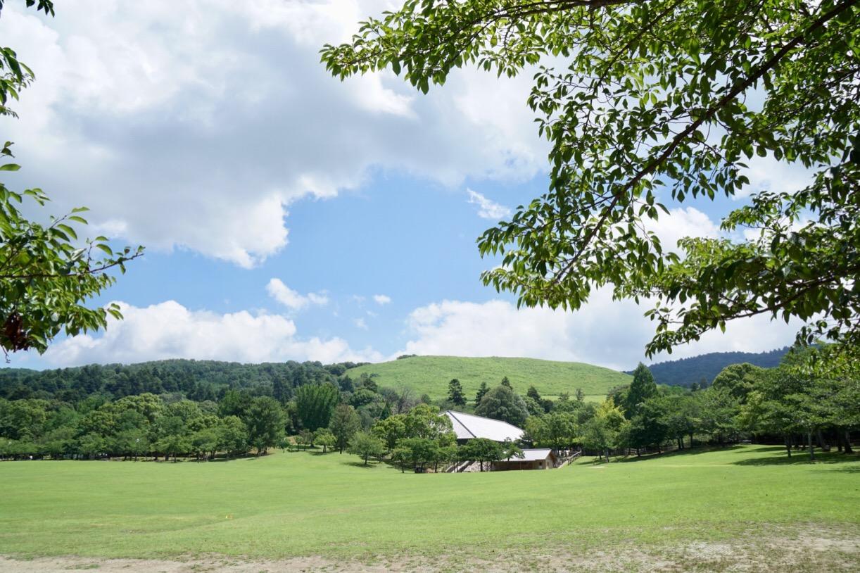 奈良公園の芝を横切っていきます。若草山が綺麗に見えています。