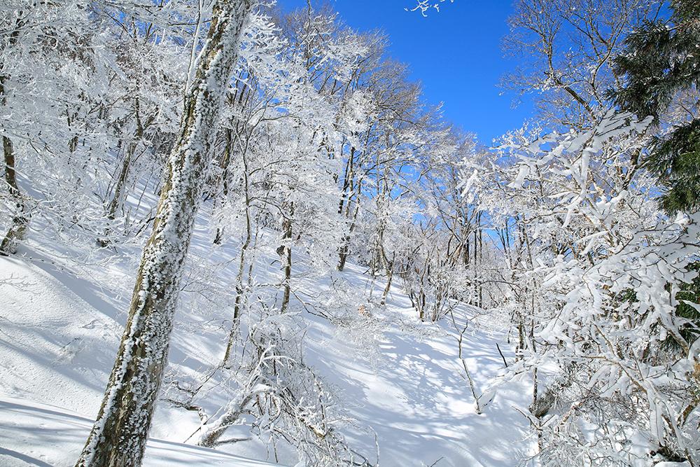 樹氷と青空、いいですねぇ。