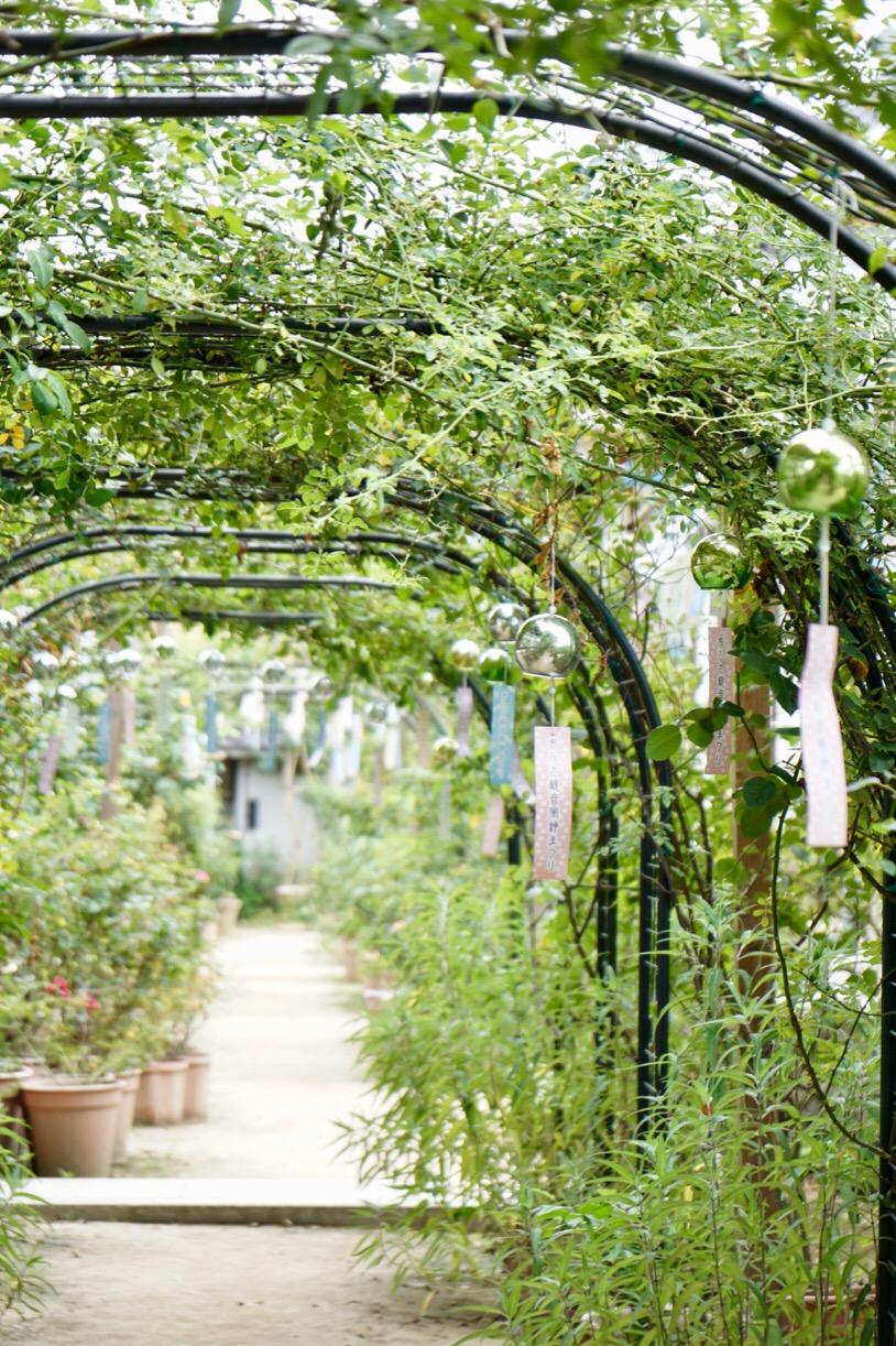 薔薇園です。今度は薔薇の季節に行きたいです。