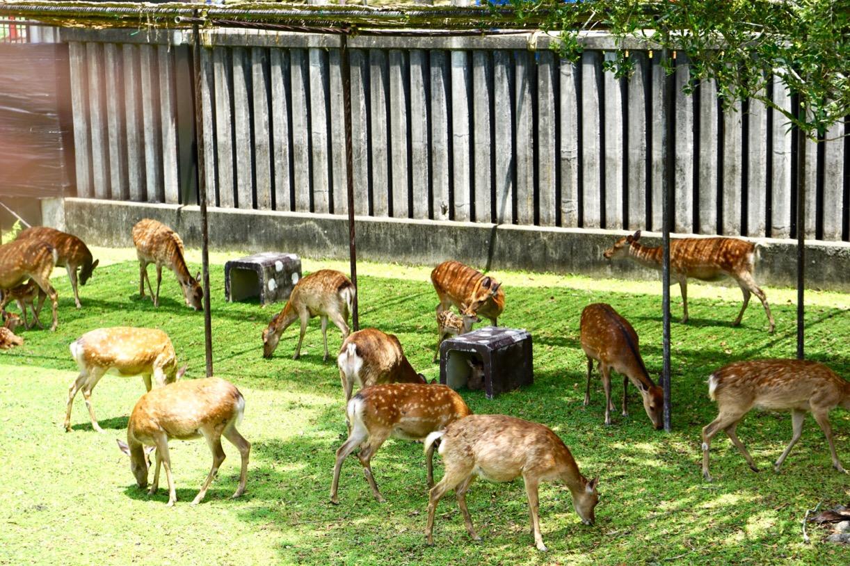 お母さん鹿がいっぱいいます。