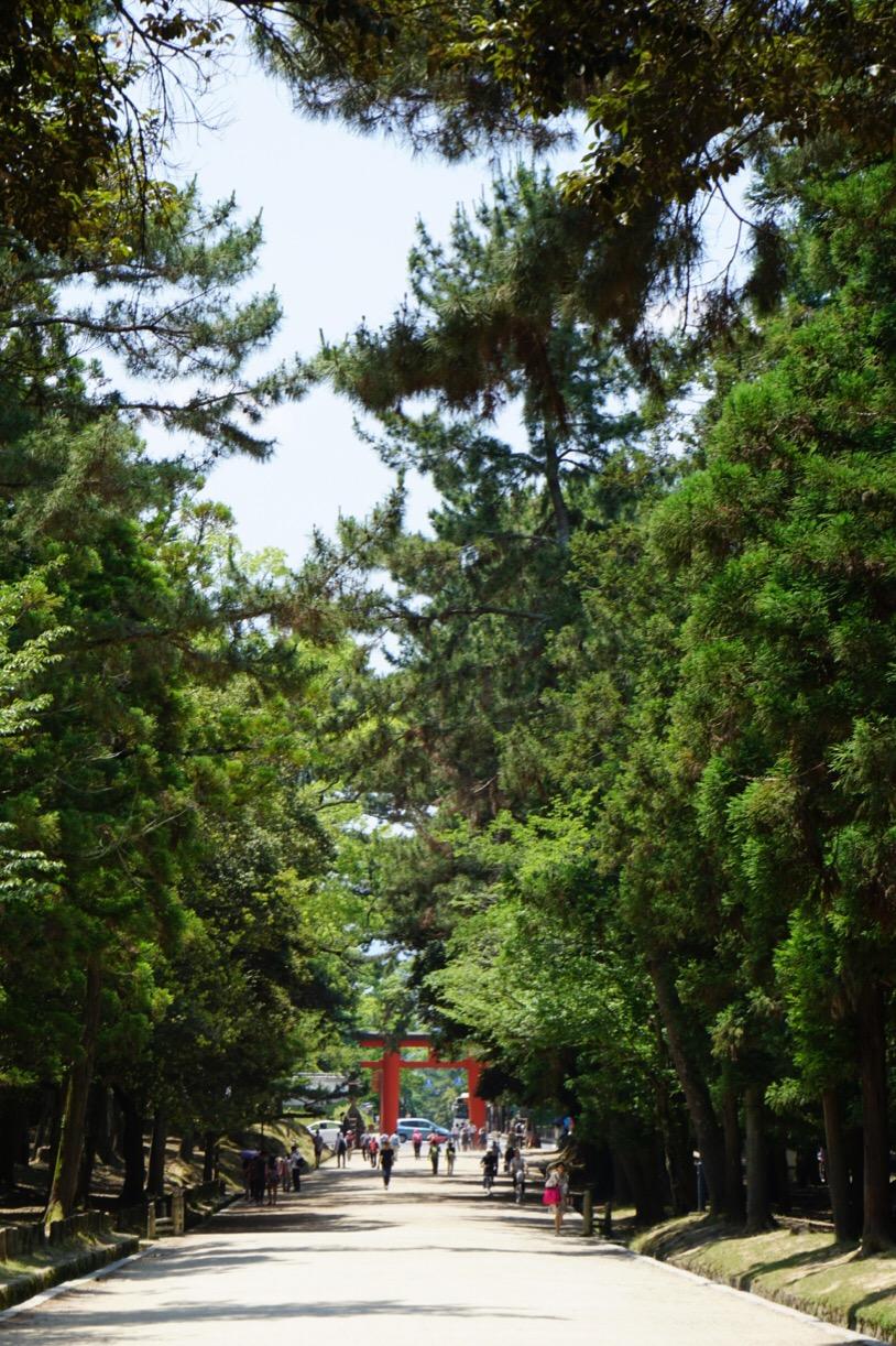 鹿園は春日大社参道にあります。