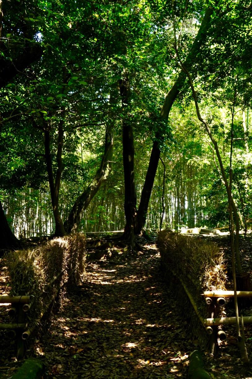自然の樹林の中に塔跡があります。