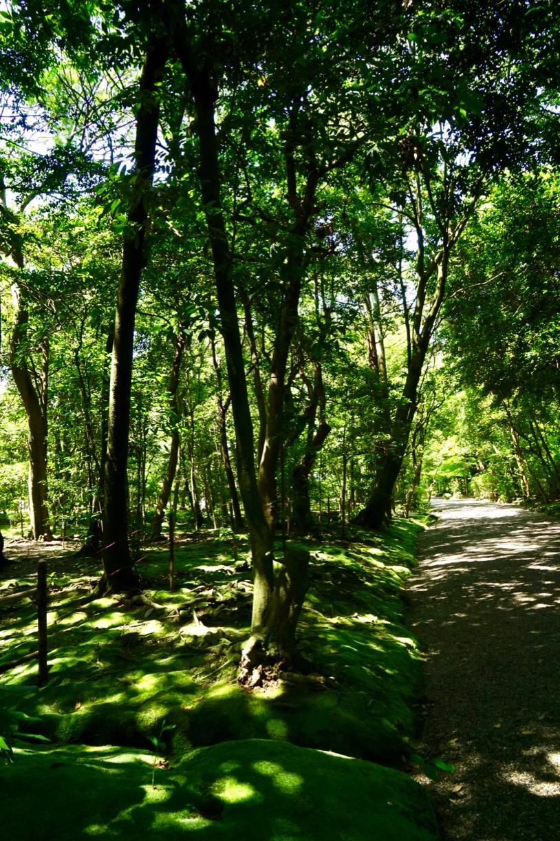 苔と木々の緑が大変美しいです。