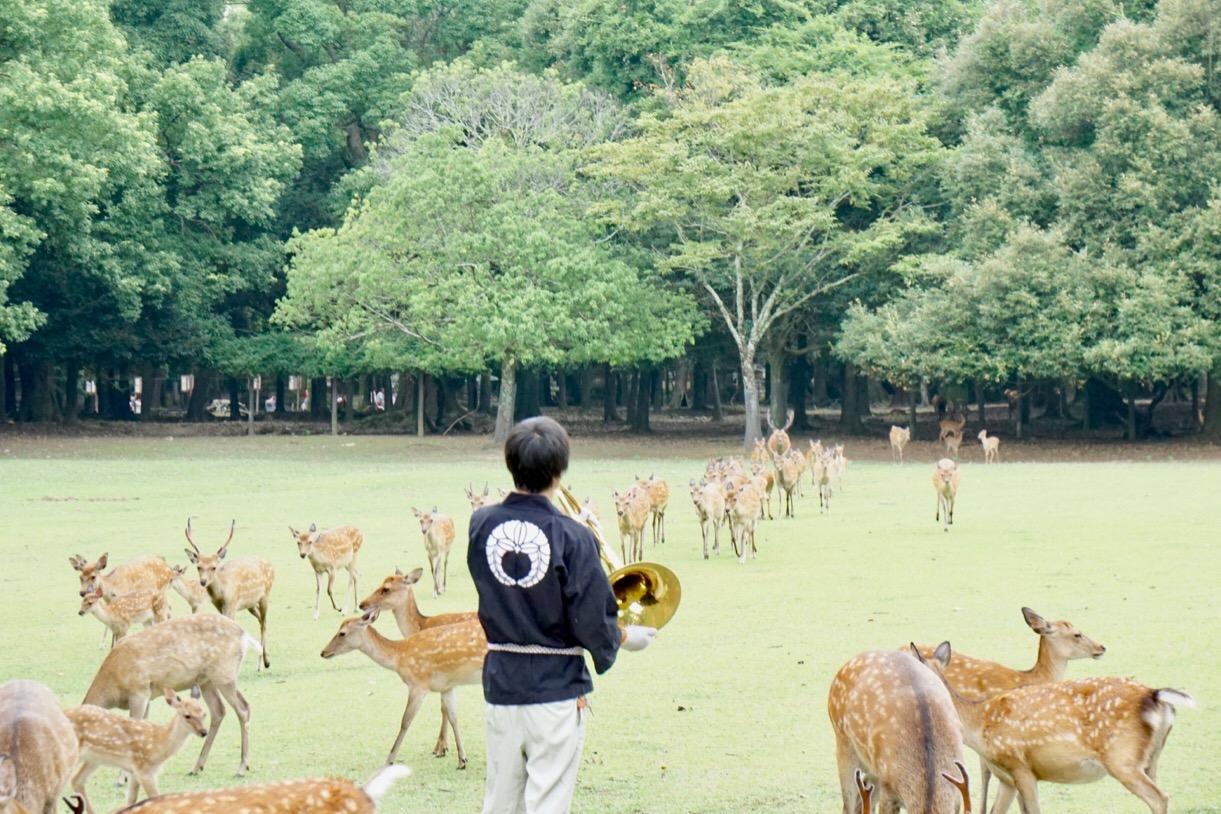 ホルンの音色が響きわたり待つことしばし。東から鹿が走ってきます!