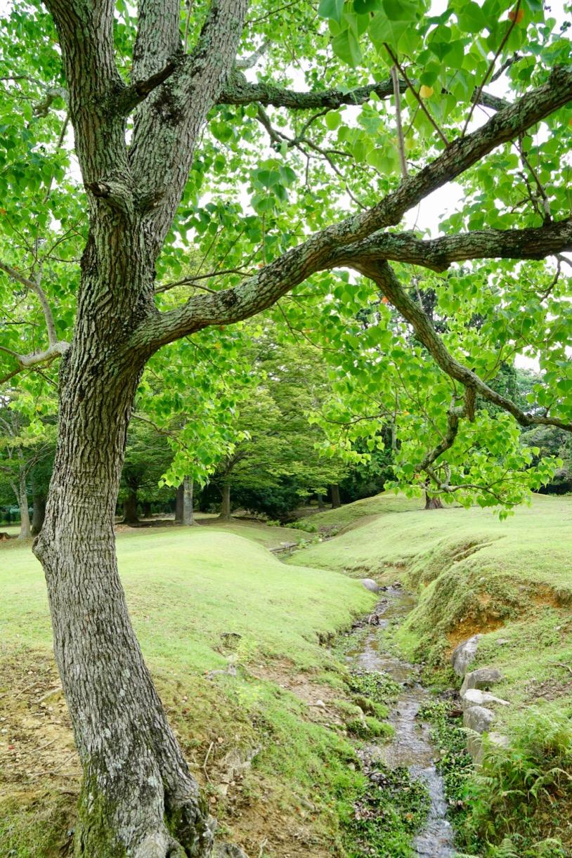 飛火野は芝が広がるとても綺麗なところです。