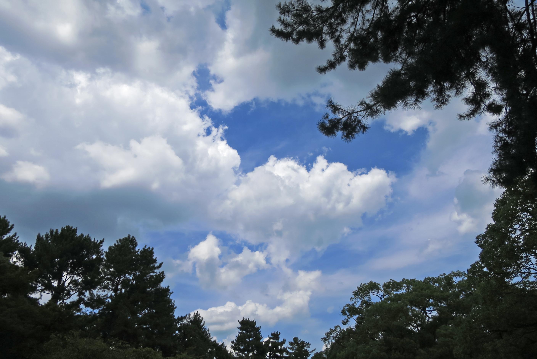 今年の夏も暑かったですね。木陰でランチをしながら夏を楽しみました!
