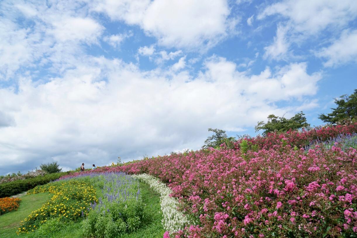 ひまわり以外の花もたくさん植えられています。