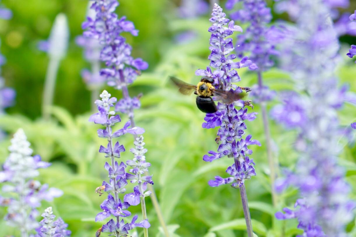 いい匂いに誘われて蜂が。