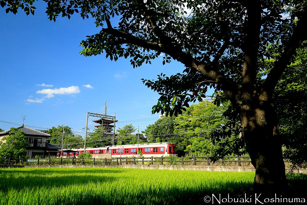 薬師寺の横を近鉄電車が走ります。