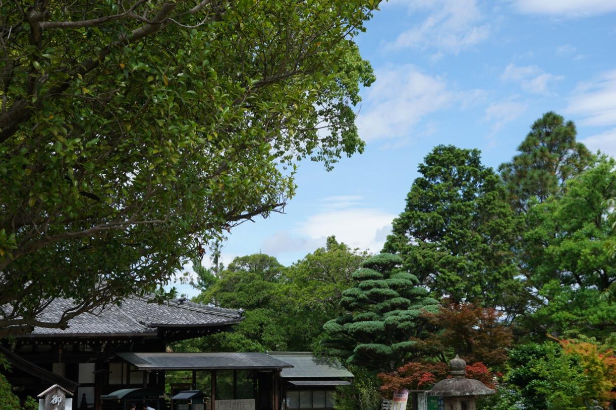 松の木やあじさいなど緑とお花が多くて綺麗です。