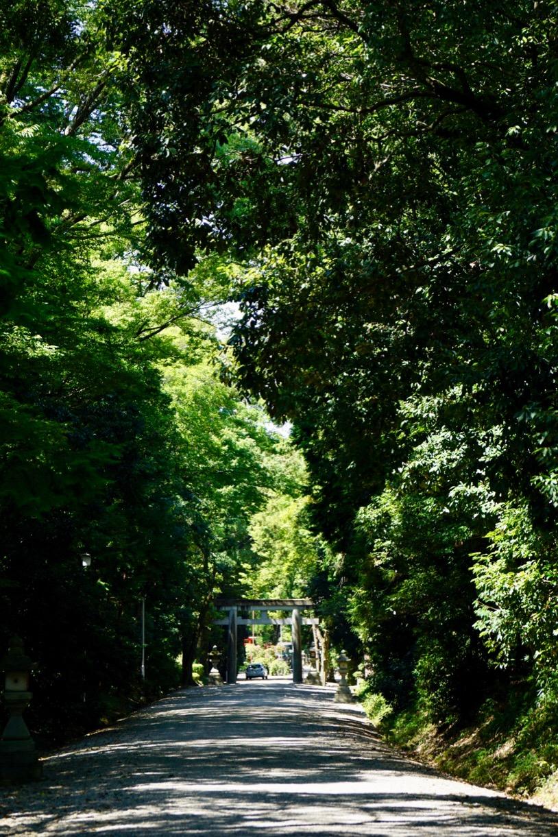 木々が多くてとても綺麗です。