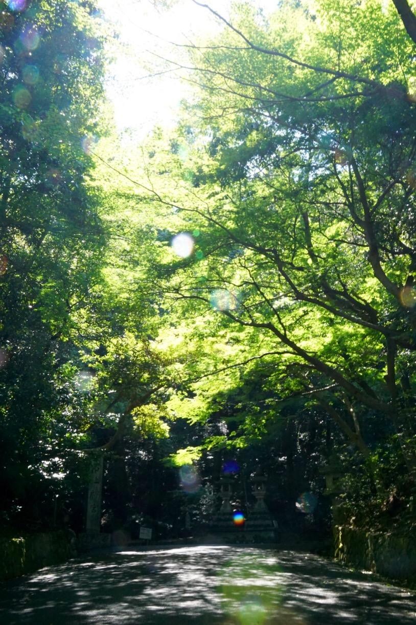 境内は神杉に覆われとても美しいです。
