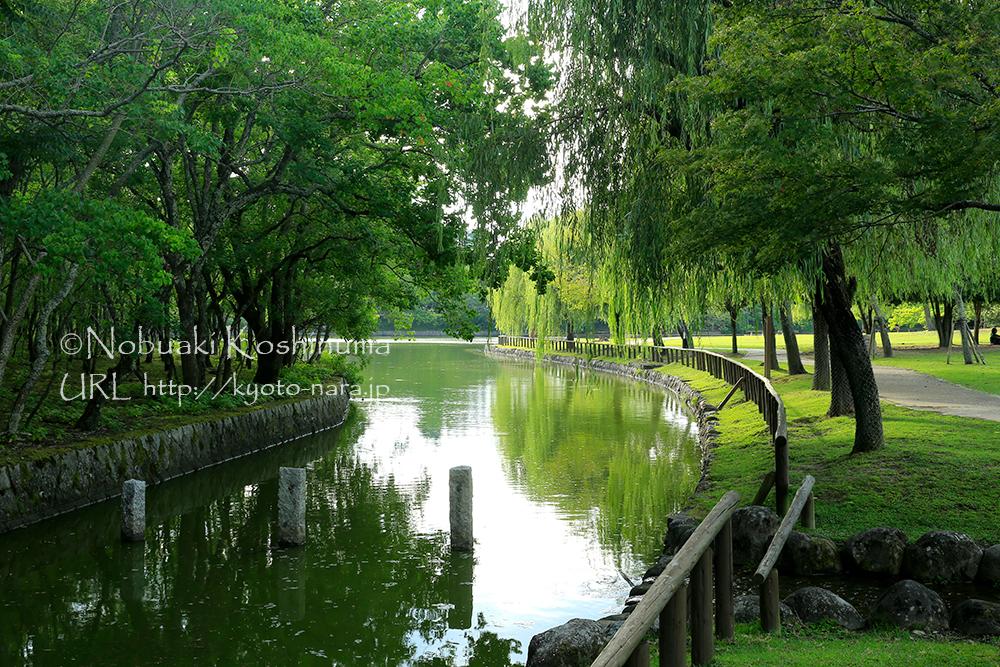 浮見堂のある鷺池の隣にある荒池です。人も少なく、お散歩におすすめです。