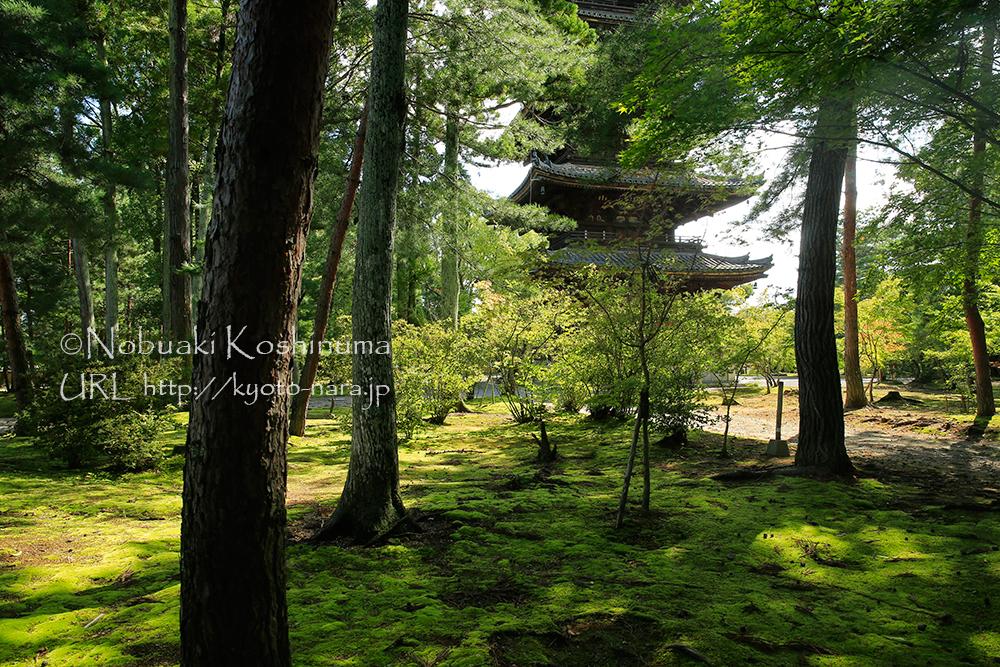樹々の間から見る五重塔と苔の絨毯が美しいですね。