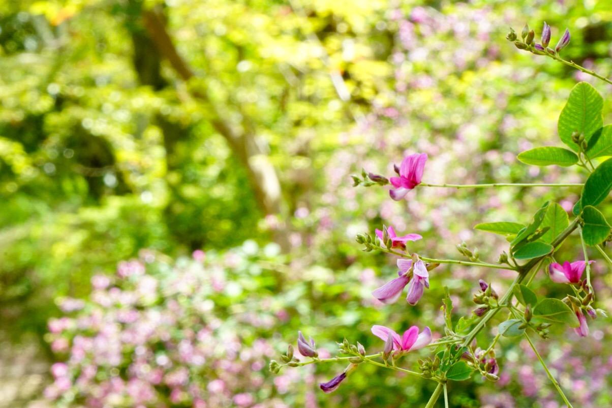 境内には薄紅色や白、紅色の花が咲きみだれています。