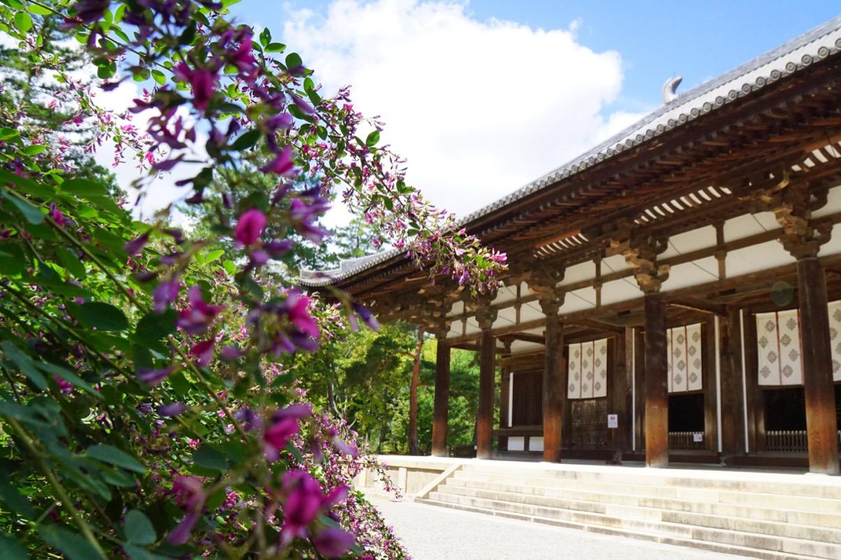 本堂の前にびっしり咲き誇っていてとても綺麗です。