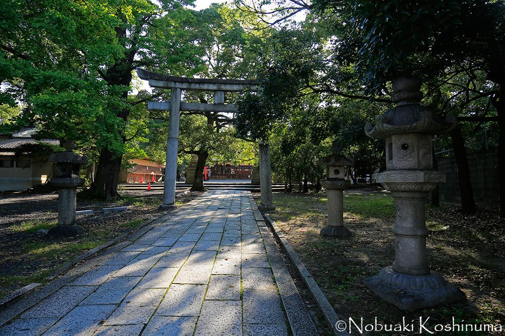 伏見区深草にある藤森神社。学問、馬と勝負事の神社として知られています。