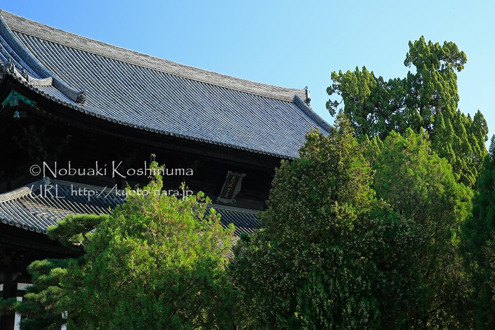 京都五山の第四位の東福寺・本堂。美しい屋根が青空に輝きます。