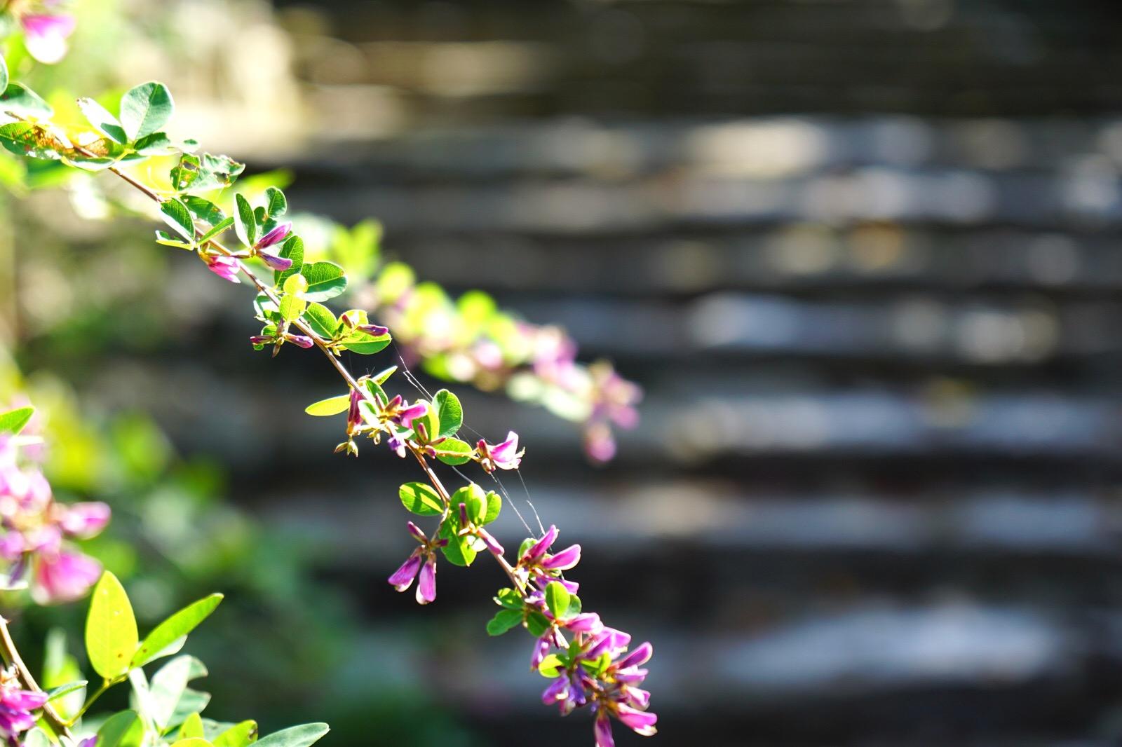 白毫寺の石段はとても雰囲気があります。濡れた石段に萩の花が映えてとても綺麗でした。