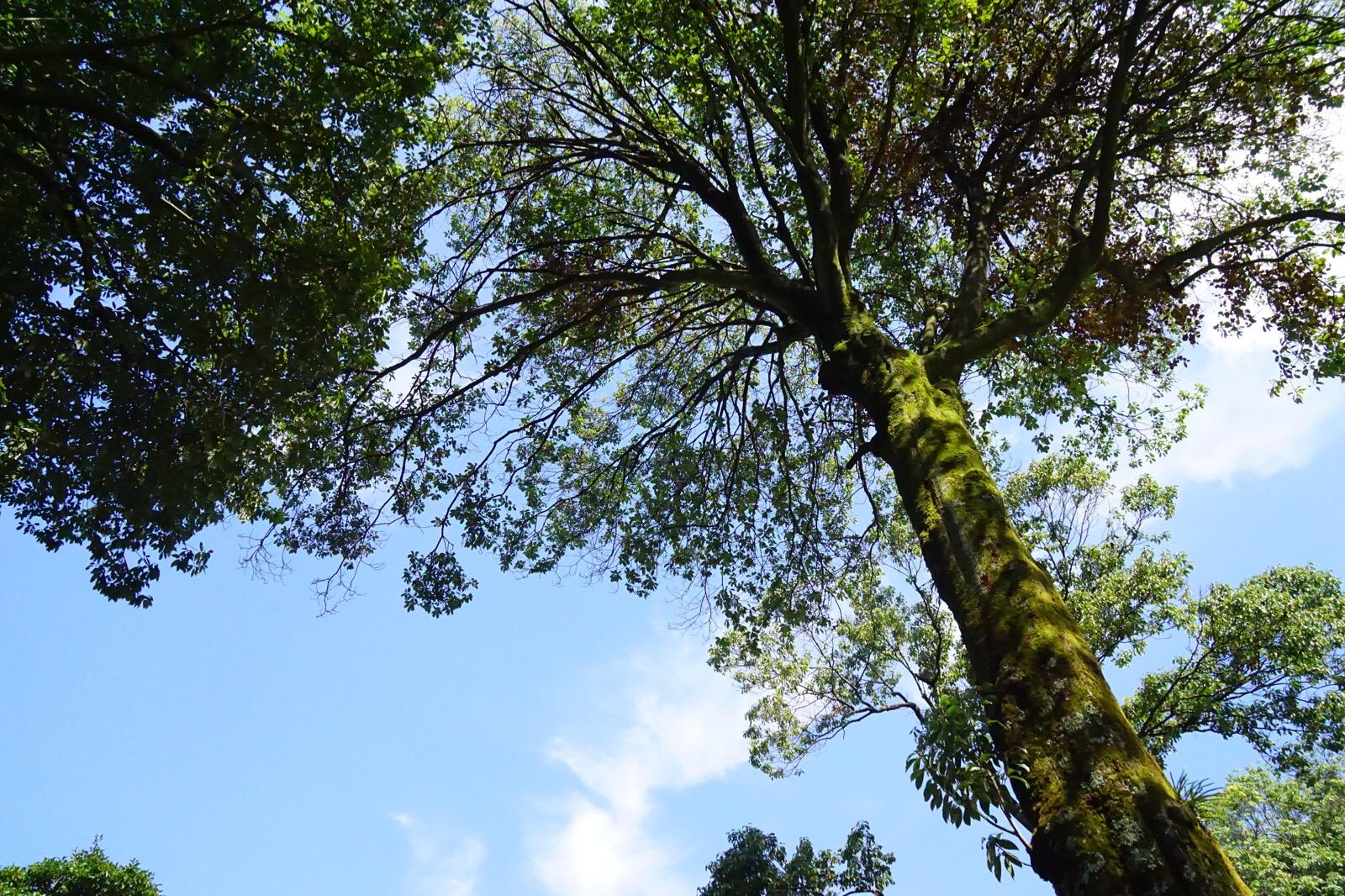 大きい木も多くて木陰から絶景を眺めながら休むことができます。