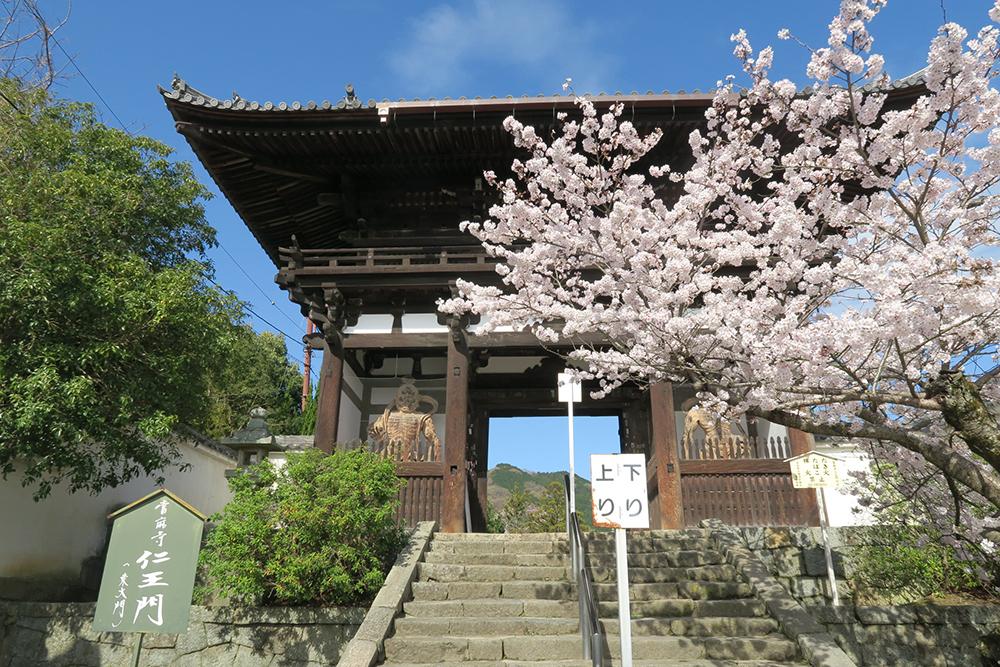 當麻寺の仁王門前。桜も満開でした。