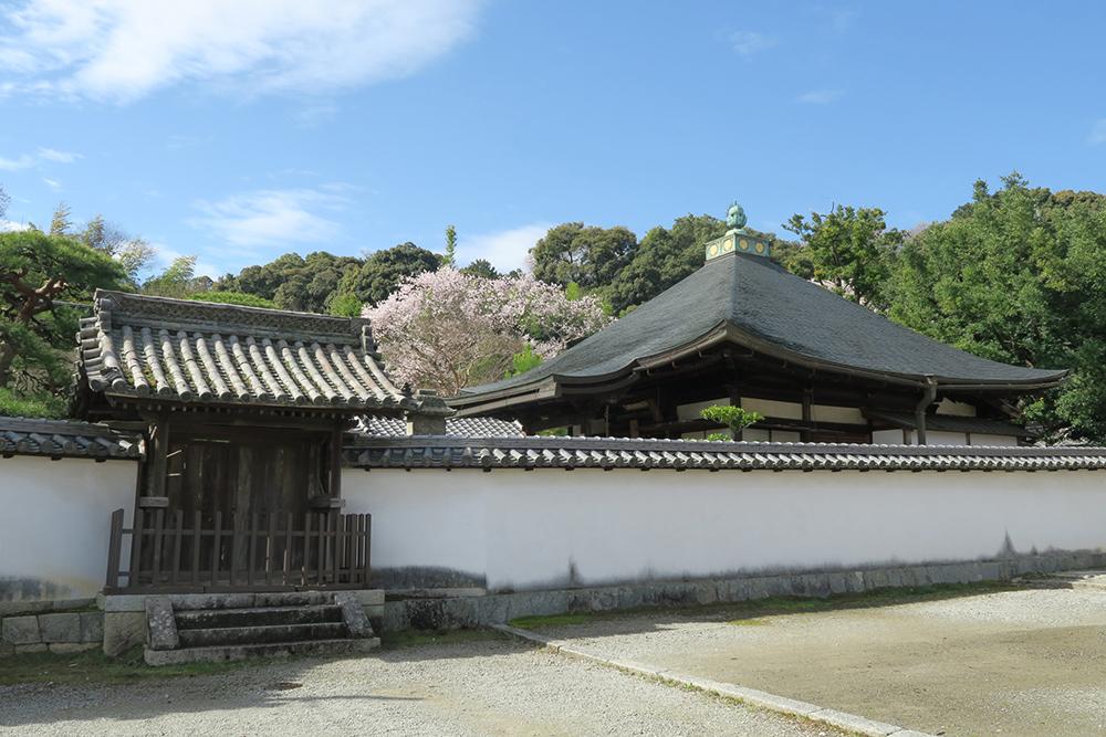 静かな佇まいで、青空に桜と白壁が美しい境内でした。
