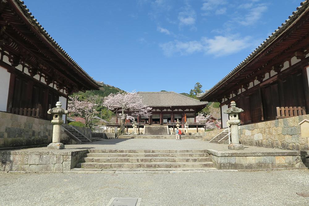 左から金堂、曼荼羅堂、講堂。丁寧な造りを感じさせる建物で、品のある空間に桜がきれいに咲いています。