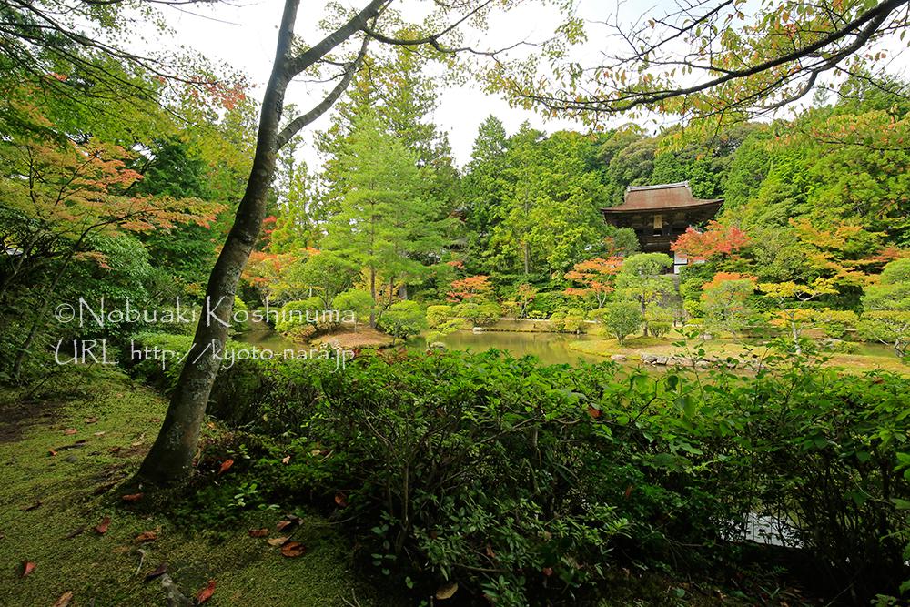 円成寺の浄土式庭園周辺では、すでに赤く染まり始めていました。